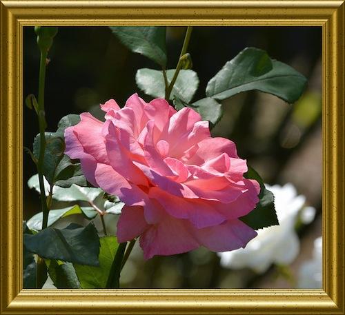 quadro con fiore