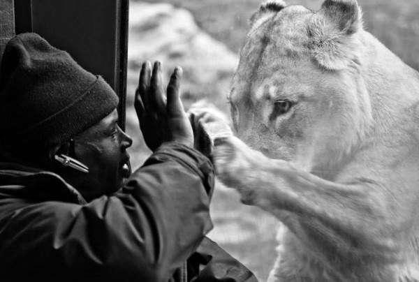 uomo e leone
