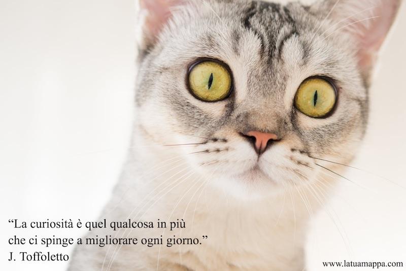 gatto curioso e frase